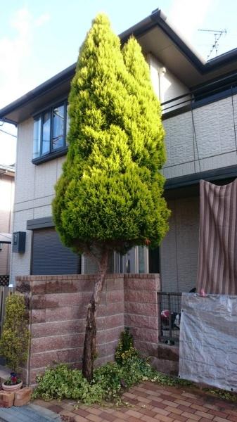植木伐採前3