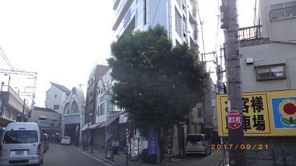 大阪植木手入れ前2