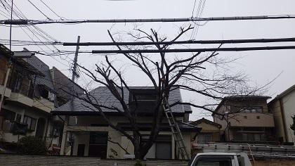 植木剪定後10
