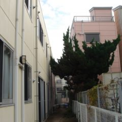 奈良市植木伐採後4