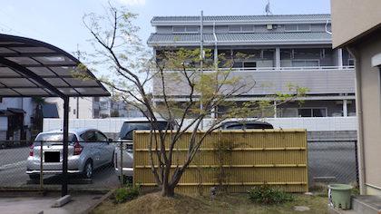 奈良植木剪定後