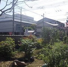 奈良県植木剪定後6