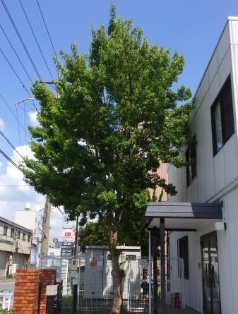 奈良植木剪定前4