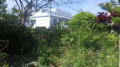 奈良県植木剪定前6