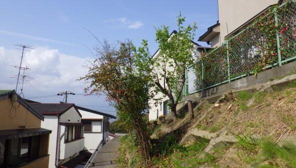 大阪植木伐採後