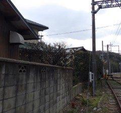 奈良植木剪定後3