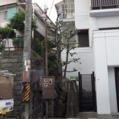大阪植木剪定後10
