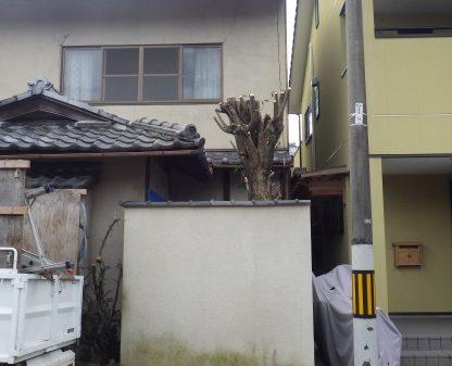 京都植木剪定後1