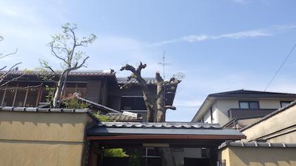 奈良県植木剪定後2
