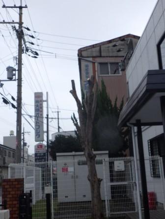 奈良植木剪定後4