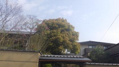 奈良県植木剪定前2